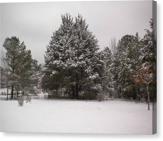 Winter Snow Canvas Print by Tessa Priddy