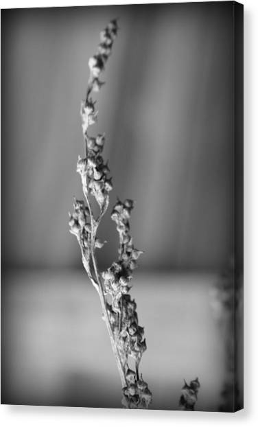 Canvas Print featuring the photograph Winter Stem II by Kelly Hazel