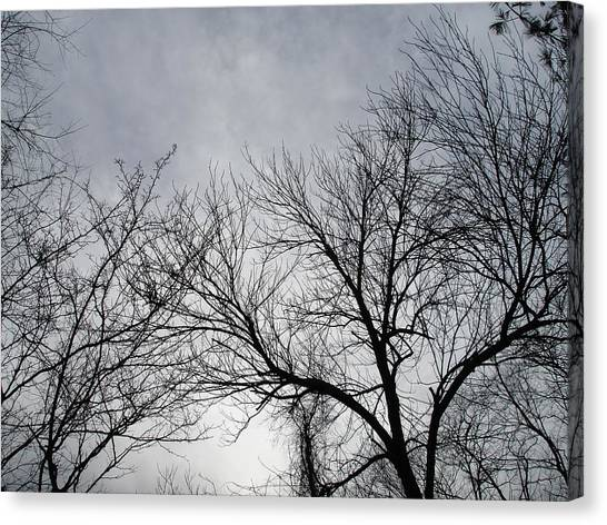 Winter Tree II Canvas Print by Suzanne Fenster