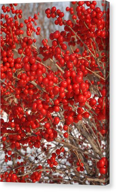 Winterberries Canvas Print