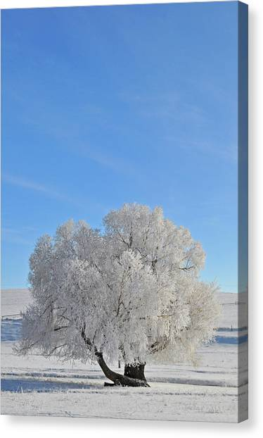 Winter's Coat In Montana's Gallatin Valley Canvas Print