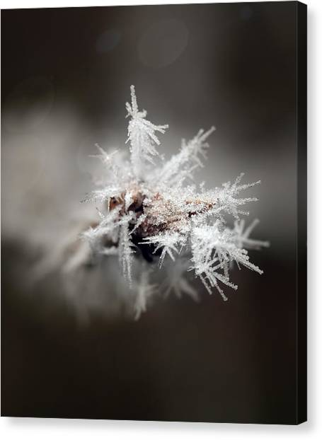 Winters Frost Canvas Print