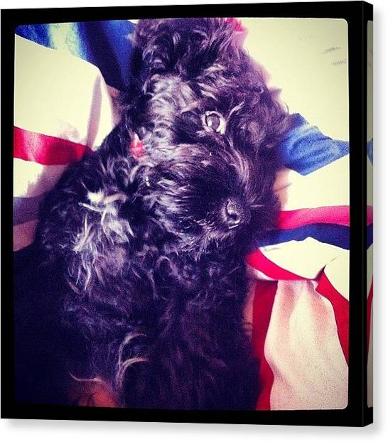 Schnauzers Canvas Print - Woke Up To This Face This Morning :p by Laurena Pascoe