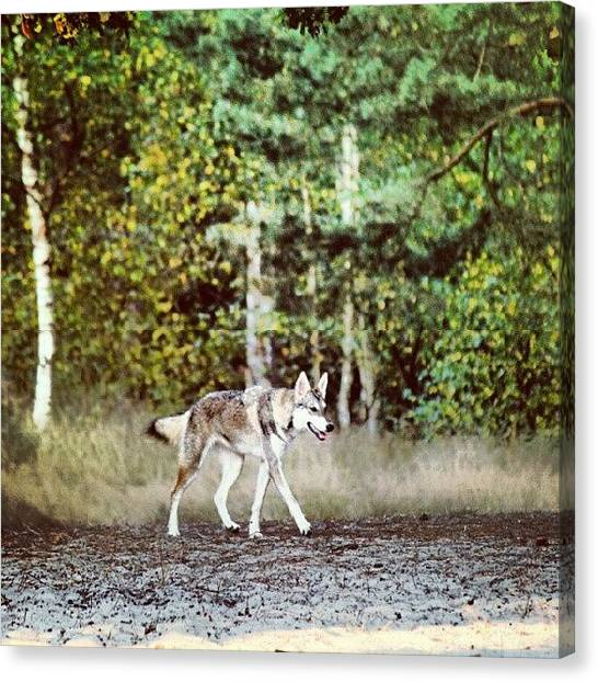 Wolves Canvas Print - Wolf Dog In The Woods  #wolf #dog by Ervina Bakker