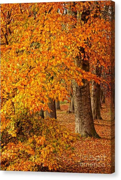 Colorplay Canvas Print - Wonderful Autumn by Lutz Baar