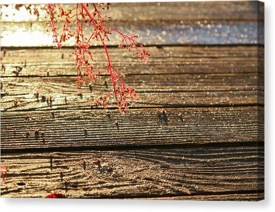 Wood Deck Red Sprig Canvas Print