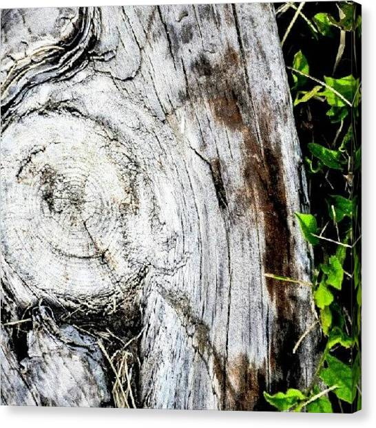 Marijuana Canvas Print - Wood Walk Way. #wood #log #stump #green by Becca Watters