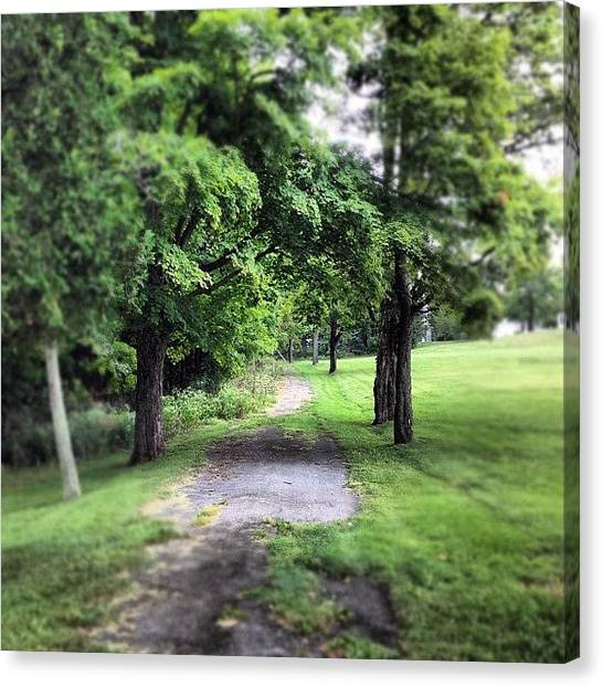 Forest Paths Canvas Print - #woodland #forest #green #trees #path by Shannon Ferguson
