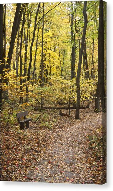 Woodland Respite Canvas Print