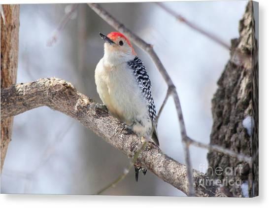 Canvas Print - Woodpecker  by Lori Tordsen