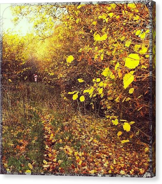 Forest Paths Canvas Print - woods Near newtown by Alexandra Cook