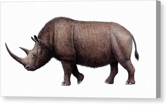 Woolly Rhinoceros, Artwork Canvas Print by Mauricio Anton