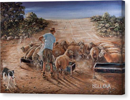 Working Sheep In South-africa Canvas Print by Wilma Kleinhans