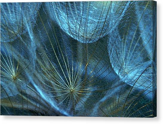 Woven Webs Canvas Print