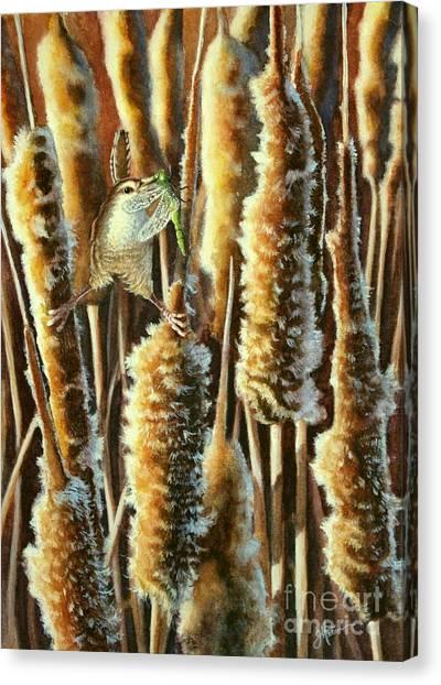Wren And Cattails 2 Canvas Print