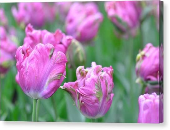Wrinkled Flowers Canvas Print