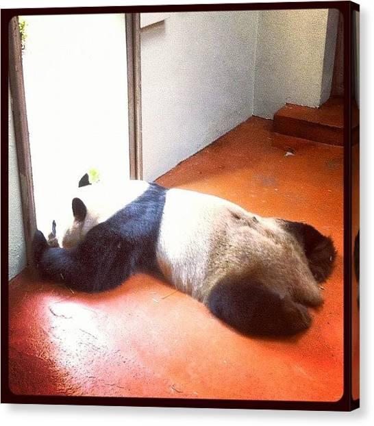 Panda Canvas Print - Yang Guang Having A Sleep! by Jude L