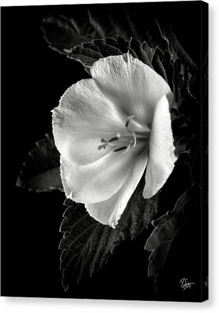 Yellow Alder In Black And White Canvas Print