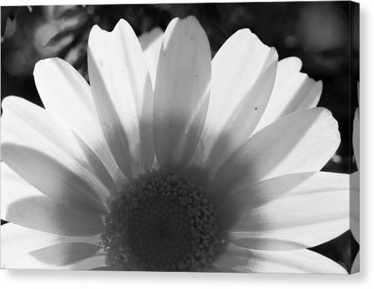 Yellow And White Flower Canvas Print
