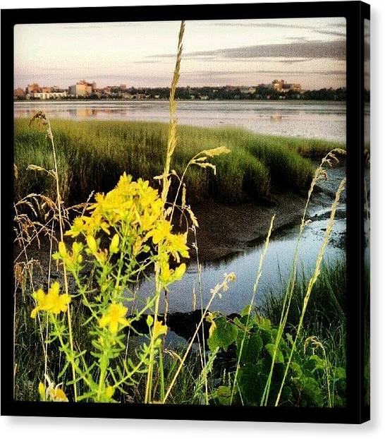 Seagrass Canvas Print - Yellow At Bc 070812 #backcove #portland by Chris T Darling
