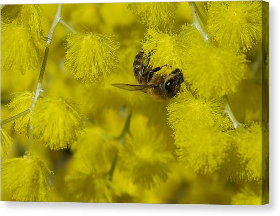 Yellow Bee Canvas Print