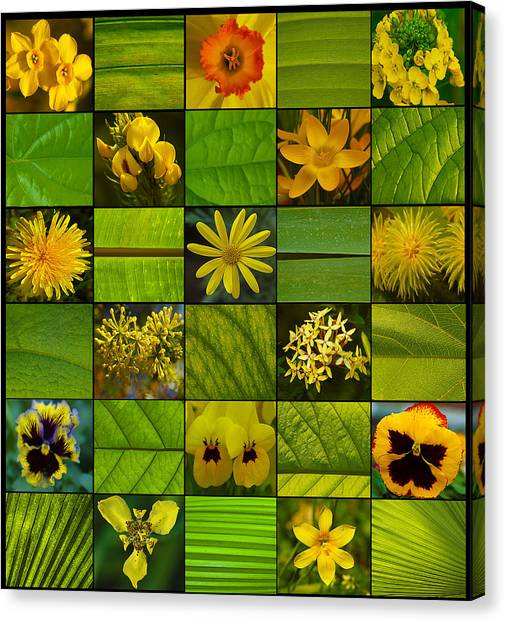 Canvas Print - Yellow Blossoms by Fine Art  Photography