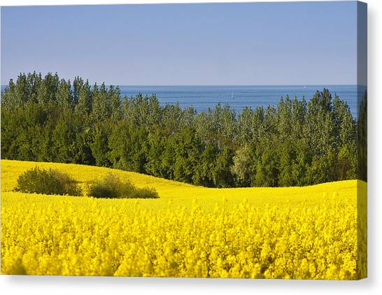 Yellow Blue Green Canvas Print