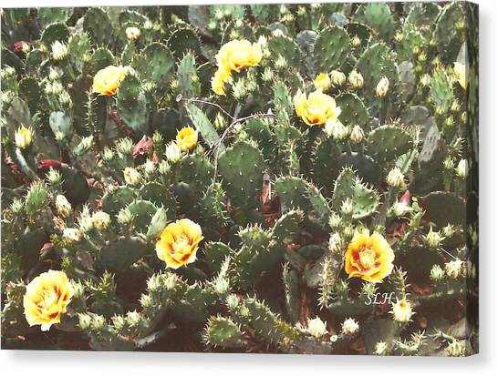 Yellow Cactus Canvas Print