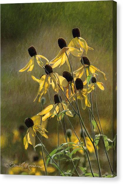 Yellow Coneflowers Canvas Print