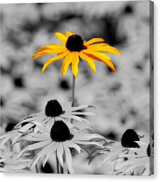 Irises Canvas Print - Yellow Daisy by Mandi Ward