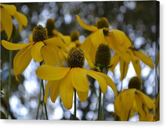 Yellow Flowers Canvas Print by Naomi Berhane