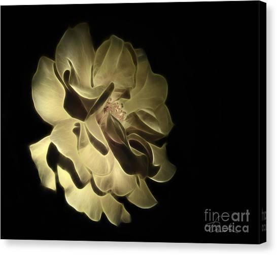 Camellia Canvas Print - Yellow Glory by Danuta Bennett