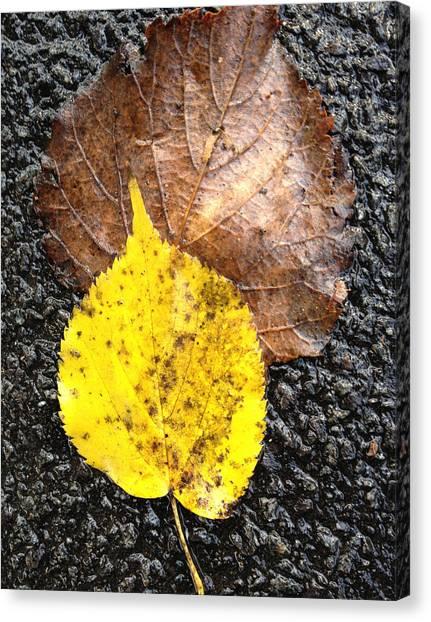 Yellow Leaf In Rain Canvas Print