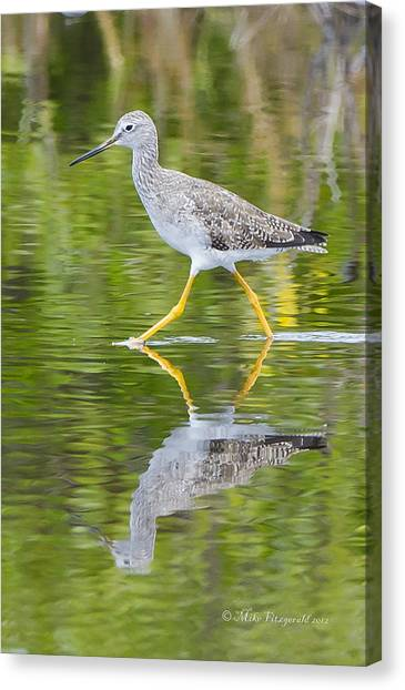 Yellow Legs Canvas Print