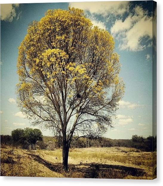 Geology Canvas Print - #yellow... (: #sertão #brasil #hot by Guilherme Freitas
