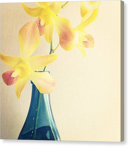 Orchids Canvas Print - #yellow #orchid #blue #vase #aqua by Rachel Boyer