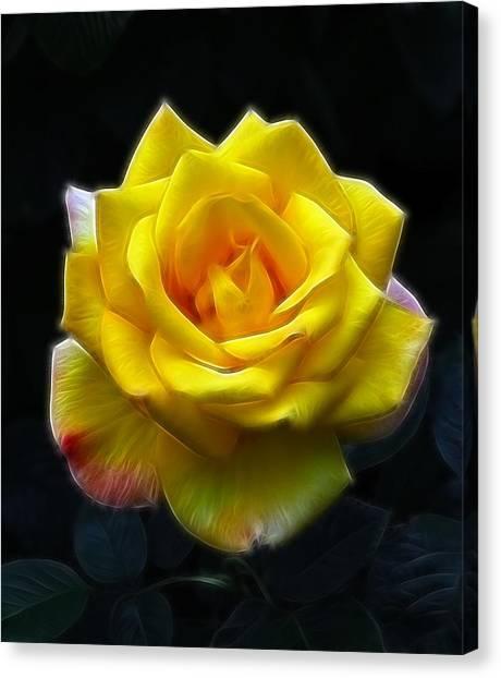 Yellow Rose In The Moonlight Canvas Print by Georgiana Romanovna