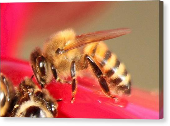 Yet Another Bee Canvas Print