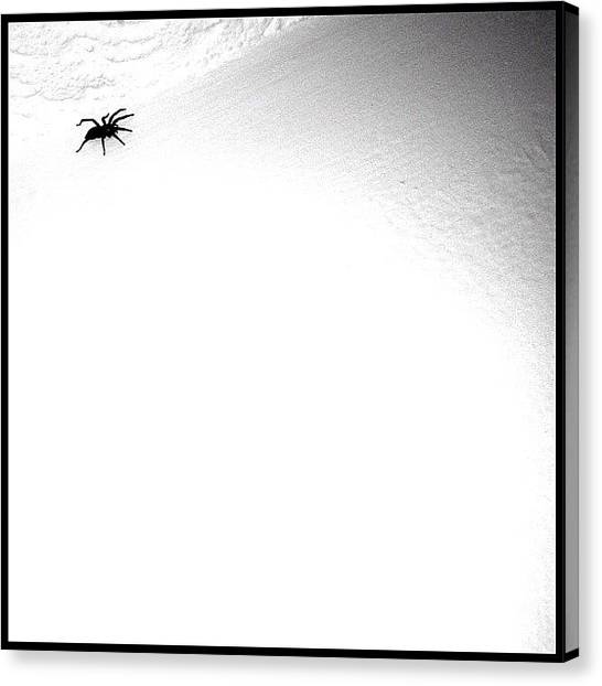 Spiders Canvas Print - Yikes! by Mark B
