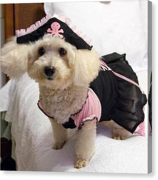 Poodles Canvas Print - Yo Ho Yo Ho!! A Pirate's Life For by Adriana Guimaraes