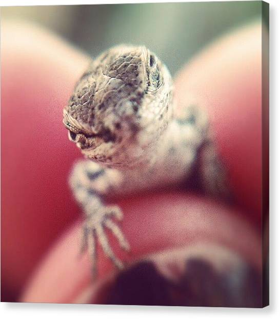 Lizards Canvas Print - You Talking To Me? You Talking To Me? by Jen Flint