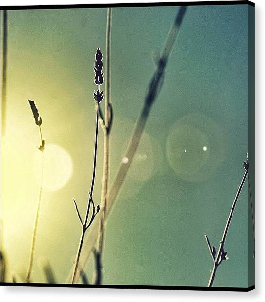 Lavender Canvas Print - You Will Never Know How Much I Love You by Francesca Sara
