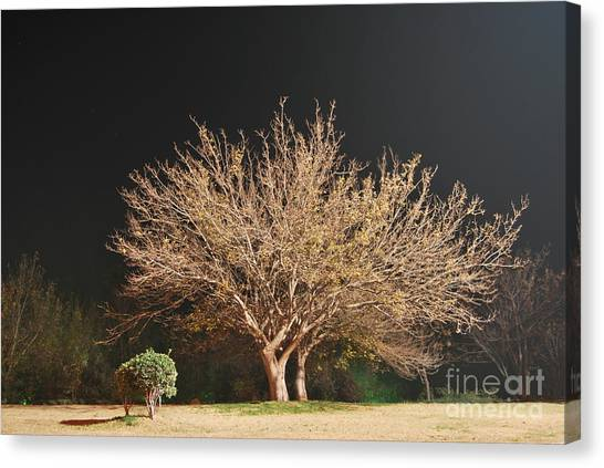 Young And Old - Winter Canvas Print