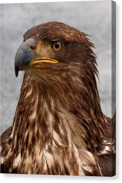 Young Bald Eagle Portrait Canvas Print