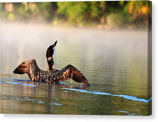Young Loon Canvas Print