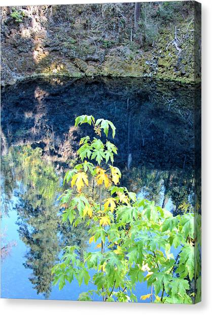 Young Maple At Blue Pool Canvas Print