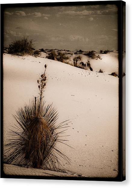 White Sands, New Mexico - Yucca Canvas Print