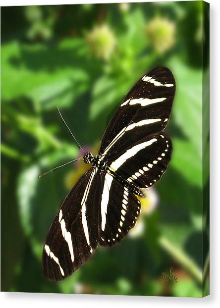 Zebra Heliconian Butterfly 1 Canvas Print