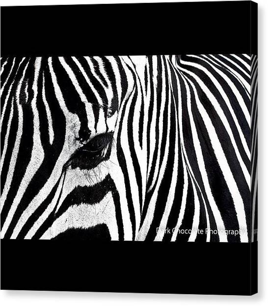 South Africa Canvas Print - Zebra Lines by Zachary Voo