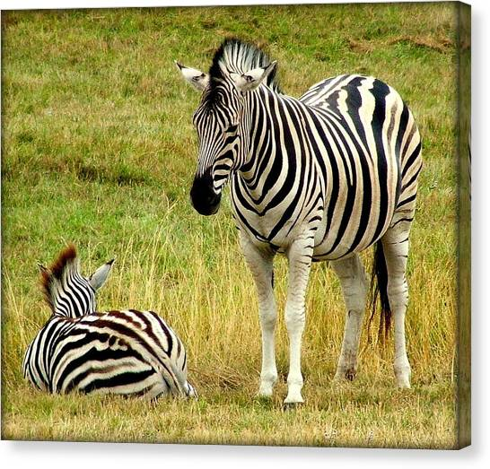 Zebra Mother And Baby Canvas Print by Judy Garrett